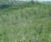 Hiking with my friend <b>JAR</b> on the side of a hill in Calgary when we see a young whitetail buck foraging among the brush.